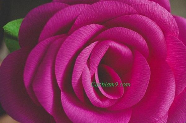 Cách làm hoa hồng bằng giấy nhún đẹp và độc đáo