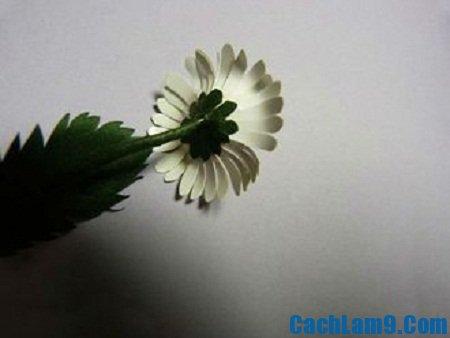 Hướng dẫn cách làm hoa cúc bằng giấy