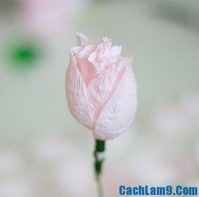 Hướng dẫn cách làm hoa mẫu đơn