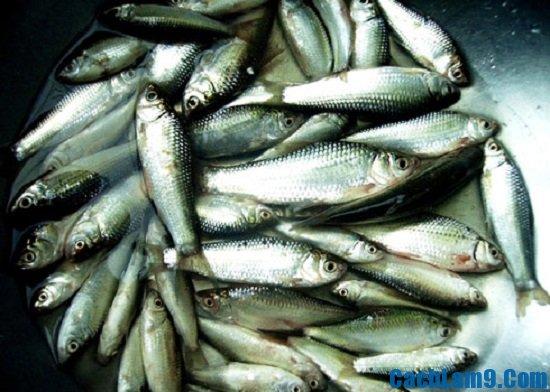 Nguyên liệu để làm bánh phồng cá linh