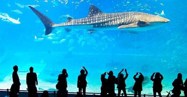 Địa điểm du lịch ở Bangkok dành cho trẻ em: Thủy cung Sea Life Bangkok