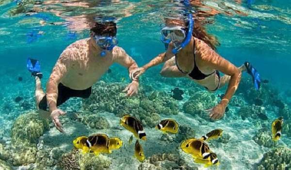 Địa điểm du lịch Đà Nẵng dịp lễ tình yêu 14/2: Lặn ngắm san hô ở Cù Lao Chàm